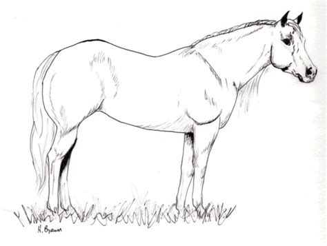 coloring pages of quarter horses quarter horse running coloring pages coloring pages