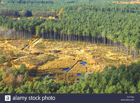 view of forest habitat royalty free stock photograph in aerial view to deforestation of pine forest forest