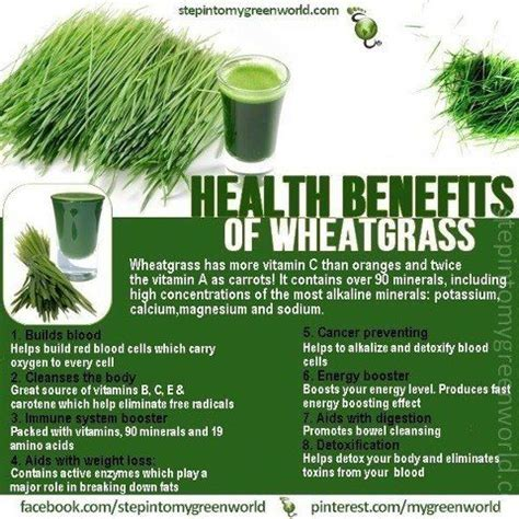 Wheatgrass Detox Benefits by 1000 Ideas About Wheat Grass Benefits On