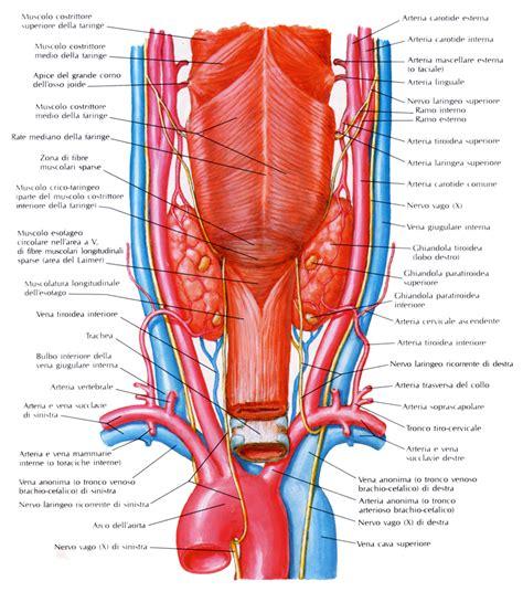 vasi sovraortici patologia tiroidea nodulare econotes