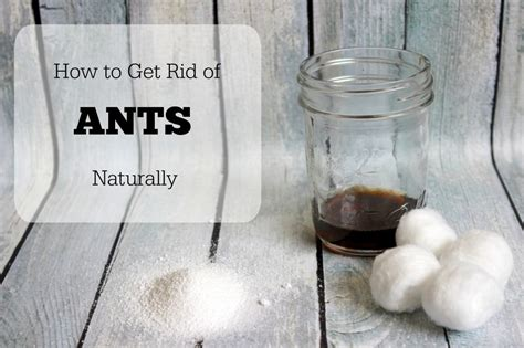 How To Get Rid Of Ants In House by Get Rid Of Ants Naturally