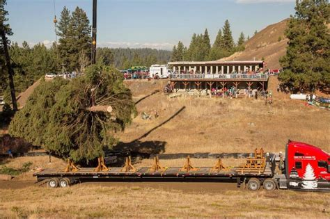 christmas tree farms boise us capitol tree cut in payette national forest local news idahopress