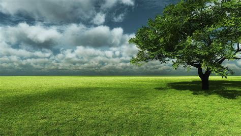 big tree with grass field landscape wallpaper wallpaper collection pinterest grasses