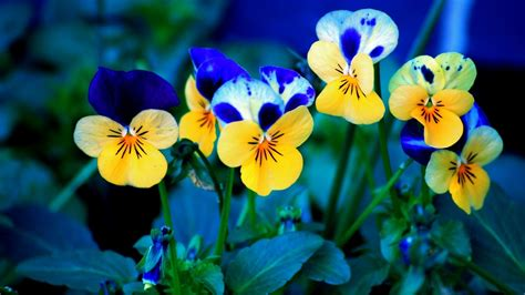 wallpapers for desktop spring flowers 1920x1080 spring flowers desktop pc and mac wallpaper
