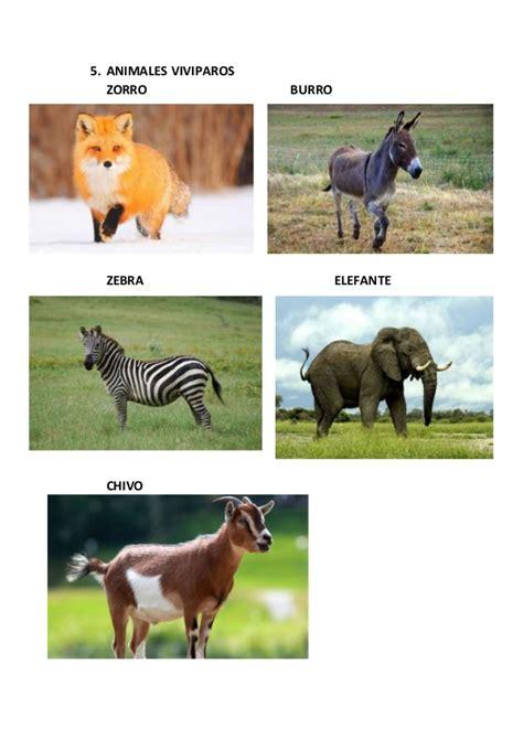 imagenes de animales carniboros animales carnivoros