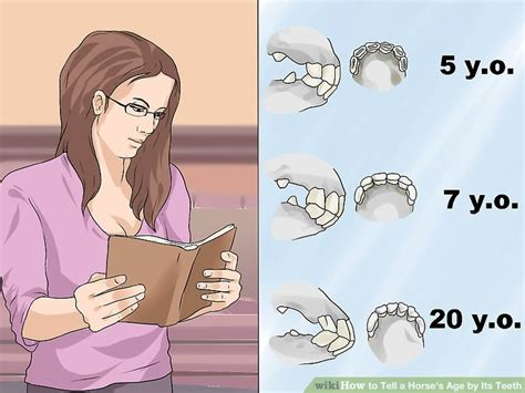 how to tell a s age teeth age hook pictures of horses