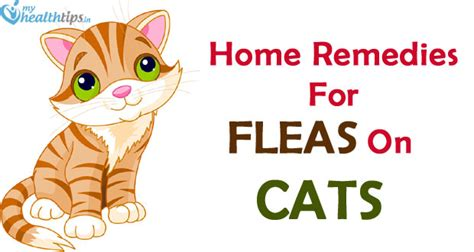 top 6 home remedies for fleas on cats culture diversity