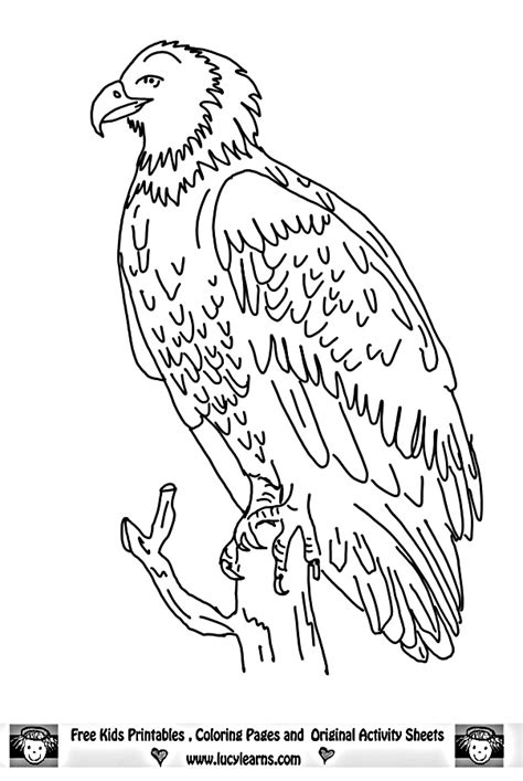 harpy eagle sketch coloring page