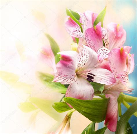 imagenes jpg de flores fondo de flores hermosas fotos de stock 169 amuzica 18839861