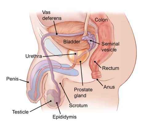 checking for testicular cancer diagram do i testicular cancer testicular cancer symptoms