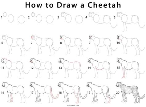 how to do doodle step by step how to draw a cheetah step by step pictures cool2bkids