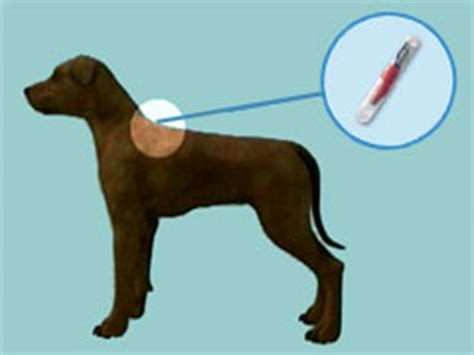 what is a microchip for dogs rancho cucamonga microchip your pet
