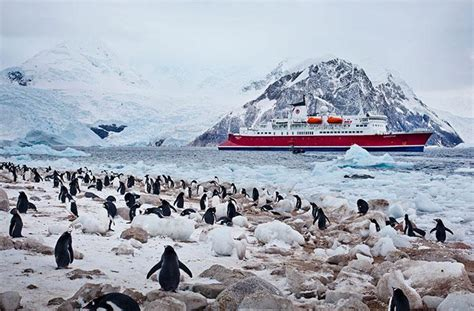 the stowaway a s extraordinary adventure to antarctica books expedition cruises g adventures