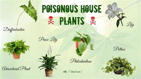 common house plants toxic to dogs what flowers are poisonous to cats 2018 cats