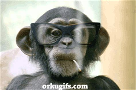 imagenes de feliz martes gif mono con gafas im 225 genes y comentarios para facebook
