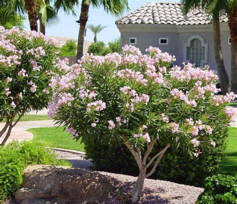 arbustos de jardin con flor plantas de jard 237 n 6 arbustos y consejos sobre c 243 mo
