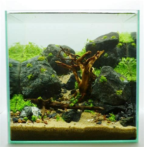 aquascaping freshwater aquarium step layout 30cm 12in cube way to happiness by adrie