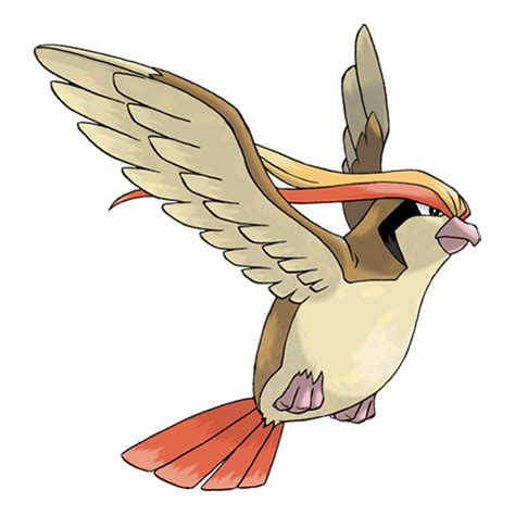 pidgeot | pokémon wiki | fandom powered by wikia
