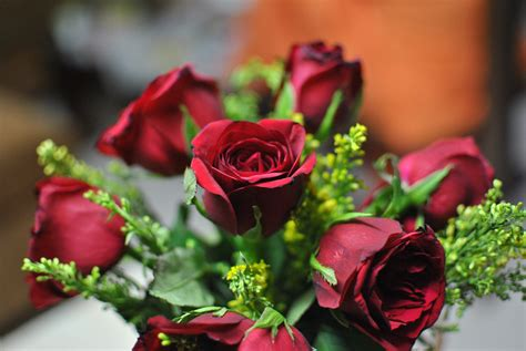 bouquet  burgundy roses  image