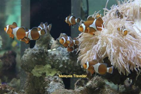 Ikan Nemo pusat ikan hiasan port dickson