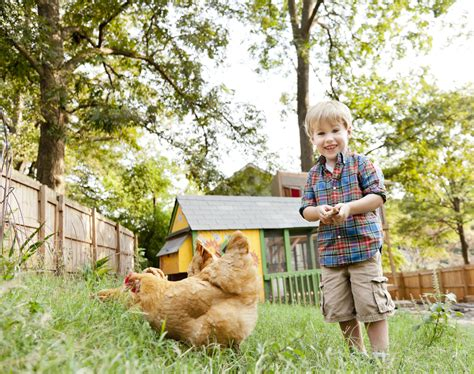 How To Keep Backyard Chickens Top 10 Questions And Answers About Backyard Chickens Countryside Network