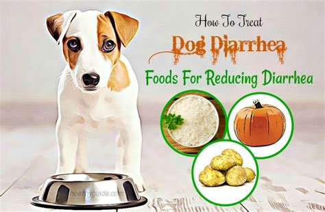 what to give dogs for diarrhea how to treat diarrhea naturally at home 10 tips