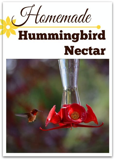 homemade hummingbird food nectar recipe queen bee coupons