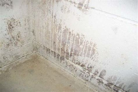 basement white mold in basement white mold wall molding