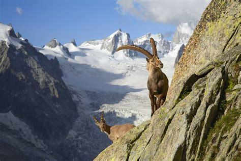 Italian Bed Pays Du Mont Blanc French Alps Savoie Mont Blanc