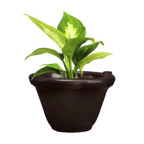 aqua camel espresso self watering planter system 1 gallon