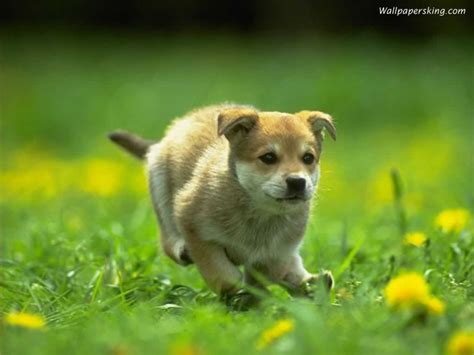 images of dogs and puppies get here some charming images of dogs and puppies houses pictures