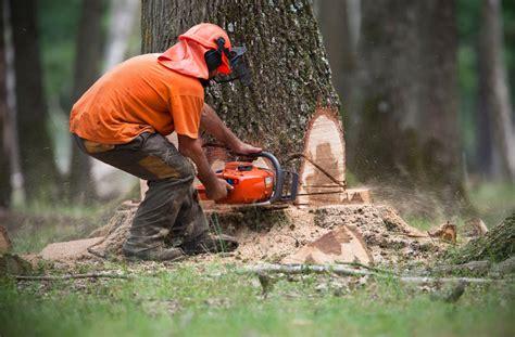 devis abattage d arbre