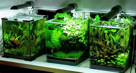 best nano fish tank the fishtank cryptocoryne country 5 gal nano aquarium