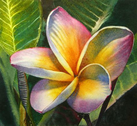 plumeria painting ten thousand square inches of canvas blushing plumeria