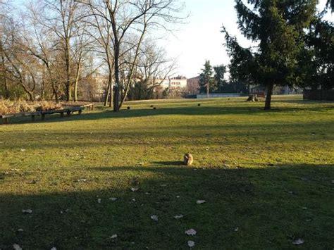 monte parma collecchio capre e conigli foto di parco nevicati collecchio