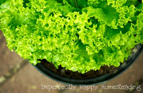 vegetables you can grow in pots vegetables in pots the best veggies to grow in containers