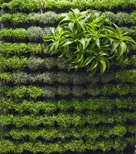 Applicative Vertical Garden Designs Iroonie Com Wall Garden Design