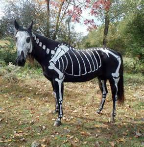 Horsey halloween costumes black horse