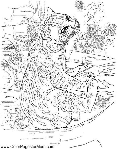 advanced coloring pages of animals advanced coloring pages animals