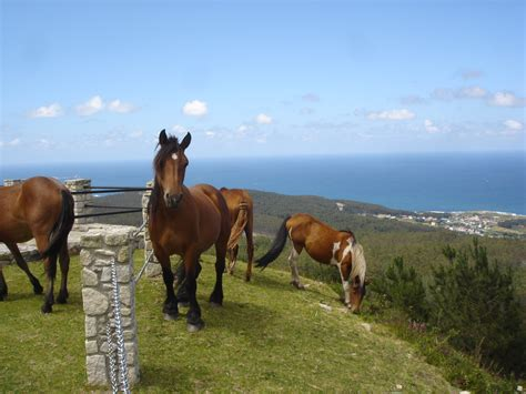 caballo poni cojiendo caballo poni folla mujer videos zoofilia con caballos cojiendo con caballos