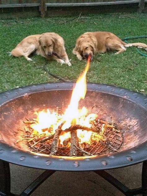 fotos de perros tomadas en el momento exacto  preciso