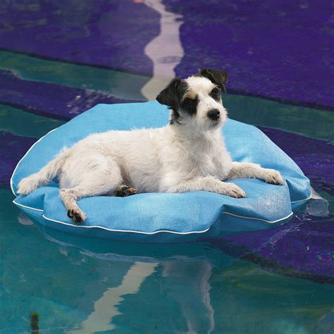 pool rafts for dogs fancy pool float and lounger