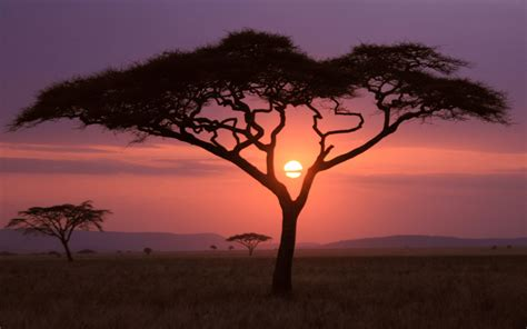 sparse vegetation savannah at sunset wallpapers and images