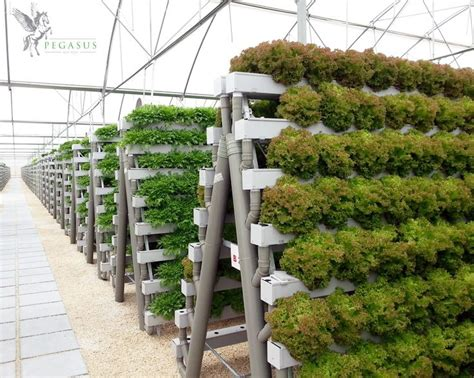 Pegasus Agritech Commercial Hydroponics Pinterest Vertical Vegetable Gardening Systems