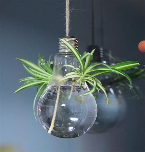 Light Bulb Planters by Light Bulb Glass Hanging Planter