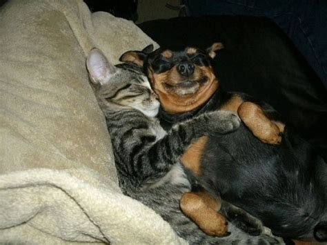 dachshund and cat hugging - Daily Picks and Flicks
