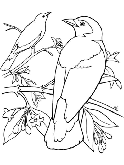 mountain bluebird coloring page 87 eastern bluebird coloring page bluebird coloring