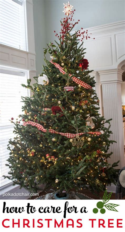 17 best ideas about fresh christmas trees on pinterest