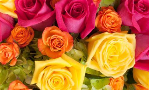 significato colori fiori linguaggio dei fiori i significati dei colori delle