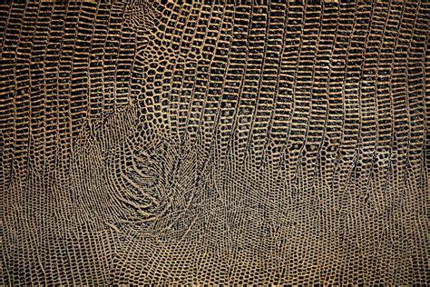 wallpapers snake skin wallpapers snake skin hd wallpapers backgrounds snakeskin